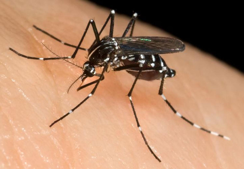 mosquitos-picadura