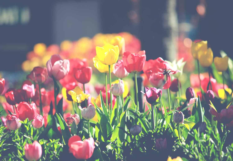 insecticidas-para-jardin